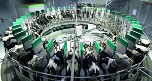 ロータリーロボット「Dairy Pro Q」